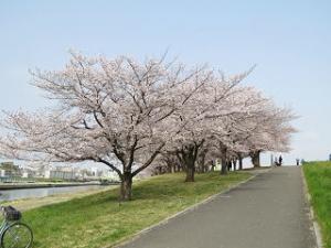 Arakawa-02_1