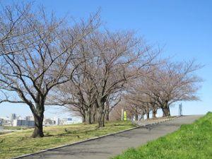 Arakawa-06-somei