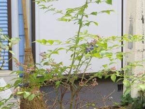 Garden-cote-03_20190727144501