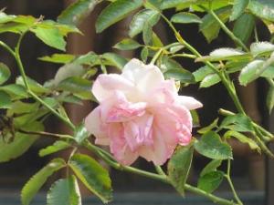 Garden-cote-05_20190727144401