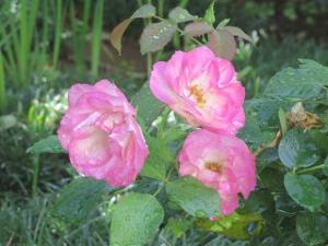 Mamas-garden-03_1