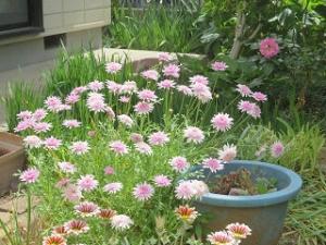 Mamas-garden-05