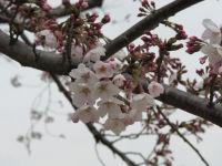 Arakawa25