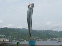 Ajiro05