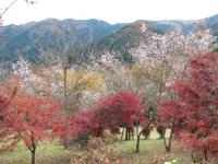 Kamikawa04
