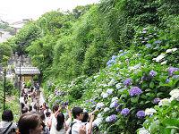 Kamakura24