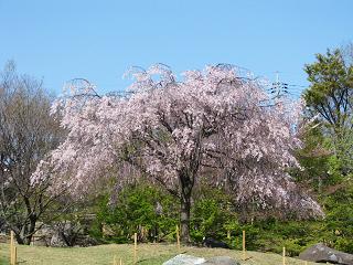 Shimizu20