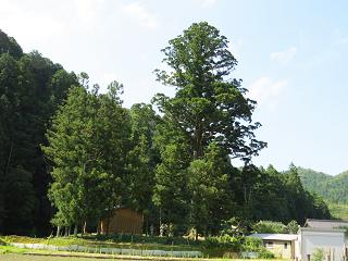 Okazaki12