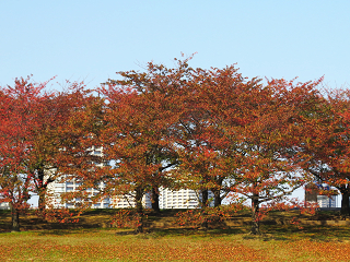 Arakawa152