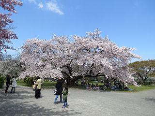 Koisikawa_07