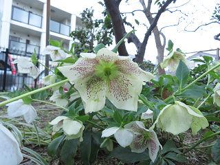 M_garden_08