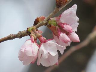 Arakawa_07