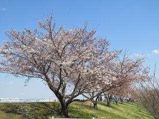 Arakawa_08