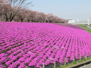 Arakawa_006