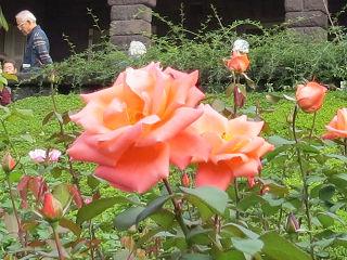 Rose_garden_014