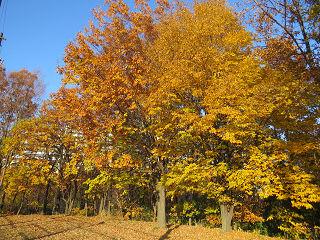 Nature_park_05