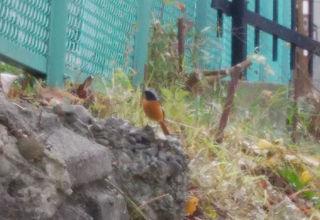 Birds_01
