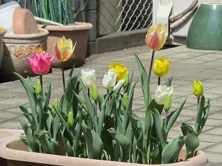 Mothers_garden_02