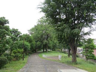 Green_road_park_01