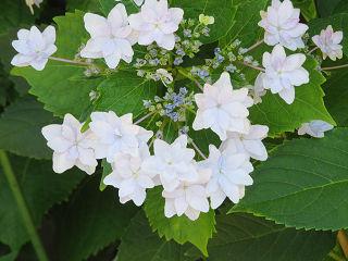 Flowers_04