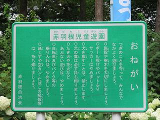 Sasiogi_hikawa_018