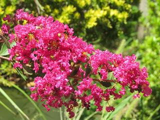 Mamas_garden_02