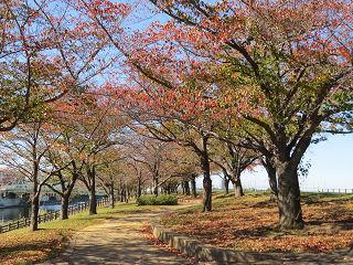 Arakawa_005