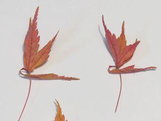 Leaf_08