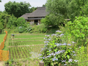 Akabane-nature-park-01_20200608115301