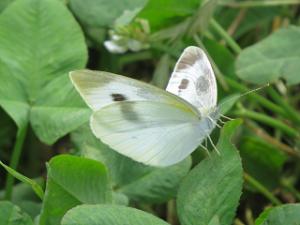 Akabane-nature-park-04_20200608115301