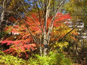Akabane-park-04