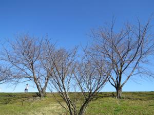 Arakawa-01_20200311104501
