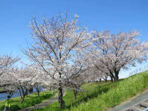 Arakawa-01_20200324132401