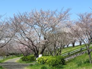 Arakawa-02_20200324132401