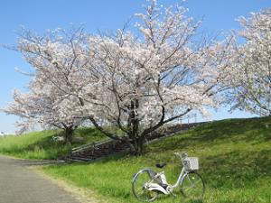 Arakawa-02_20200403122501