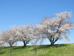 Arakawa-02_20200406133401
