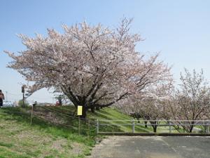 Arakawa-05_20210331141001