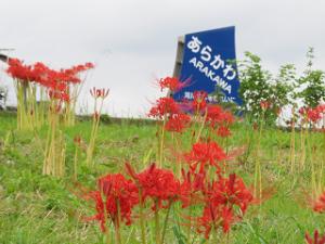 Arakawa-06_20210914124401
