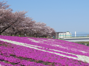 Arakawa-siba-01
