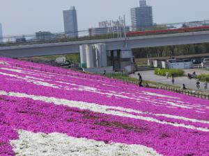 Arakawa-siba-02_20200412092301