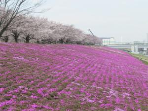 Arakawa-sibazakura-01
