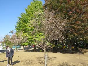 Asukayama-02_20201111124901