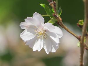 Asukayama-05_20201111124901