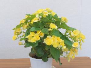 Flower-01_20200611131601