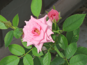 Flower-01_20200822085601