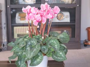 Flower-01_20201226165801