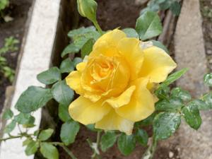 Flower-02_20200612105601
