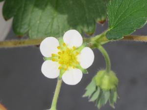Flower-03_20200822085601