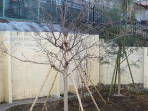 Garden-cote-002_20210113143401