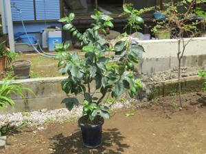 Garden-cote-01_20200603141201
